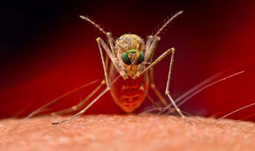У жителя Кагула обнаружили вирус лихорадки Западного Нила