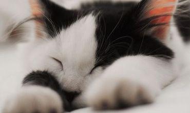 Правила жизни с Котом