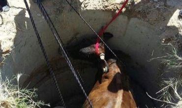 В Каушанском районе корова провалилась в колодец, ее вытащили спасатели.