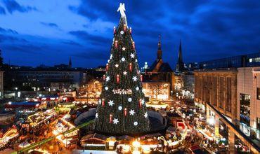 Какую елку установят на центральной площади к Новому году
