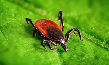 Больше всего от опасных насекомых страдают любители парка «Долина роз» на Ботанике.