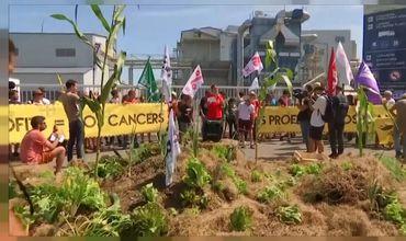 Во Франции проходила акция протеста против производства гербицидов.