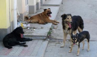 В столице проведена стерилизация более 300 бездомных собак.