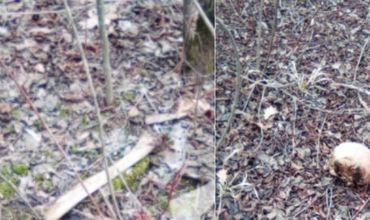 Macabru: Oseminte umane, descoperite lângă o pădure din Telenești
