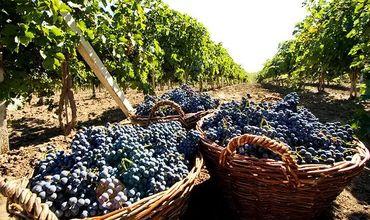 Сложностей добавляют большие запасы не проданных вин и неблагоприятная конъюнктура на мировом винном рынке.
