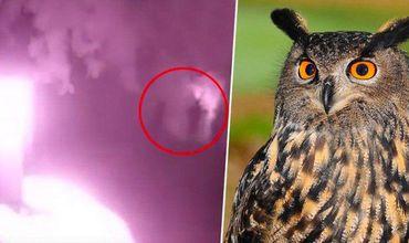 Британец снял на видео легендарное мифическое существо.