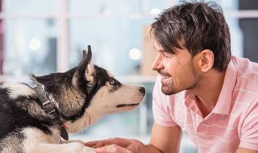 """Собаки """"заражаются"""" стрессом от хозяев, выяснили ученые."""
