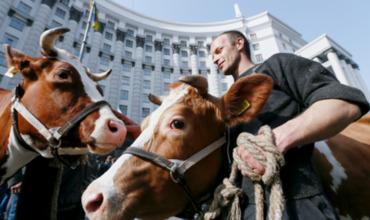 В партии Порошенко предложили отдать деньги студентов коровам.