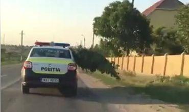 Патрульная машина, перевозящая коноплю, была замечена на юге страны.