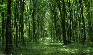 В Гагаузии площадь лесов за год увеличилась на 257 гектаров