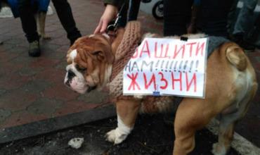 Зоозащитники взывают к властям Молдовы с требованием ужесточить наказания за издевательства над животными.