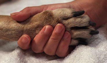 Кодряну призывает к разработке поправок к Кодексу о правонарушениях и Уголовному кодексу, закона о домашних животных. Фото: moldova.org.