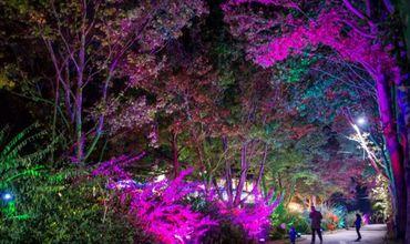 """В парке """"Валя Трандафирилор"""" на Разноцветной аллее установят фортепиано"""