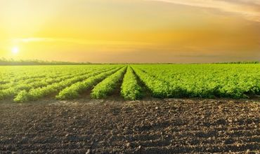 Начинающие сельхозпроизводители могут получить субсидии от государства.