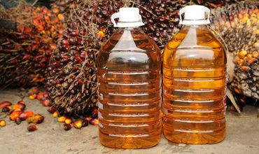 Пальмовое масло угрожает экологии четырех континентов