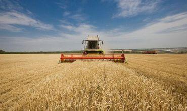 В Приднестровье собрали богатый урожай зерновых.