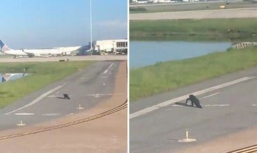 Во Флориде аллигатор заблокировал взлетную полосу в аэропорту