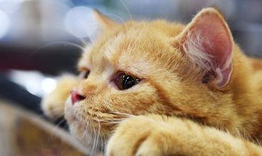 В Краснодаре около десяти кошек выбросили с четвертого этажа.