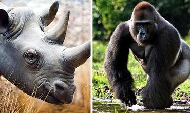 Ученые назвали животных, которые обречены на вымирание