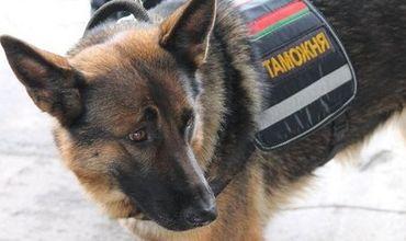 На водителя микроавтобуса, следовавшего по маршруту «Тирасполь- Москва», среагировала служебная собака.