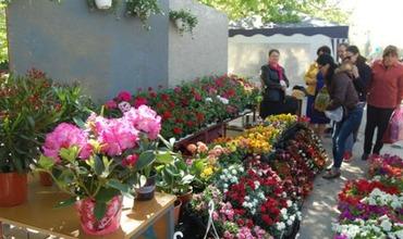 """Выставка-ярмарка """"Парад цветов"""" посвящена продвижению и поддержке цветоводов. Фото: trm.md."""
