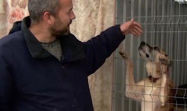 Пока отдельного закона о защите животных в Молдове нет, о дворнягах заботятся в девяти приютах страны.