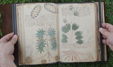 Манускрипт Войнича является одной из самых загадочных средневековых рукописей.