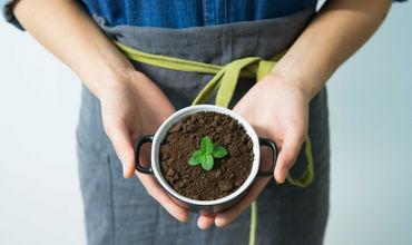 Cel mai bun îngrăşământ ecologic. Cum faci compost chiar dacă trăieşti la bloc. Foto: pexels.com