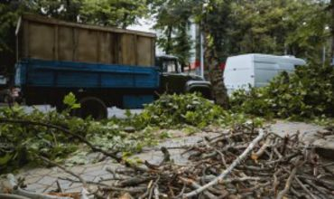 С сегодняшнего дня примэрия начинает массовую чистку деревьев
