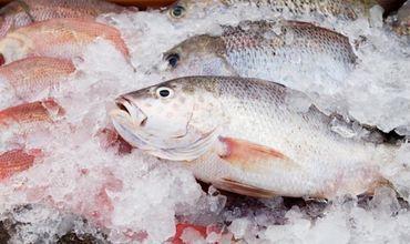 Почти треть украинского экспорта мороженой рыбы пришлась на Молдову