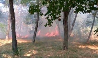 На Скулянке произошло возгорание растительности