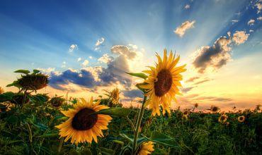 В Молдове 7 сентября ожидается переменная облачность без осадков