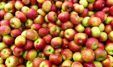 Россельхознадзор не впустил в РФ очередную партию молдавских яблок под предлогом обнаружения в них карантинного вредителя.