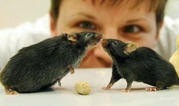 В ходе эксперимента были использованы мыши в возрасте шести месяцев или двух лет, которые сидели на диете.