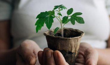 Глобальное потепление может уничтожить большую часть растений Европы