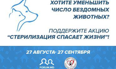 FORUM.MD объявляет о запуске акции по стерилизации бездомных собак в городе