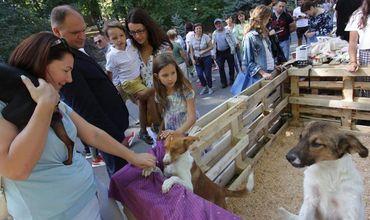 Чебан поддержал организаторов фестиваля в помощь бездомным животным
