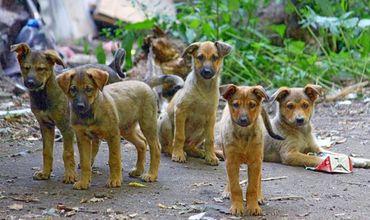 Отловленных в Бельцах собак с трудом спасают от голодной смерти.