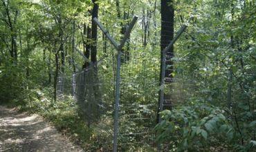 В распоряжении арендаторов находится около 7000 гектаров леса.