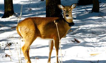 Каждое четвертое животное гибнет от рук человека, заявляют экологи.