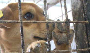 În Anul Câinelui, moldovenii nu se grăbesc să-şi cumpere un prieten patruped