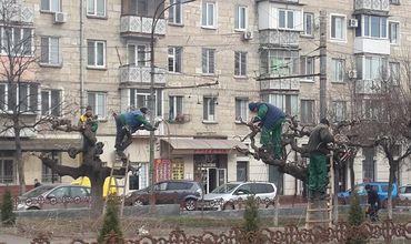 В столице проводится весенняя обрезка деревьев.