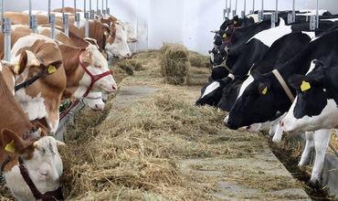 Producătorii autohtoni de carne, vizitați de experți din Arabia Saudită