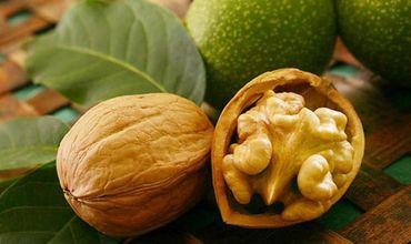 В этом году ожидается рост урожая ореха
