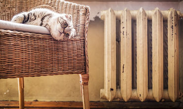 Ученые рассказали, почему освежители воздуха опасны для кошек.