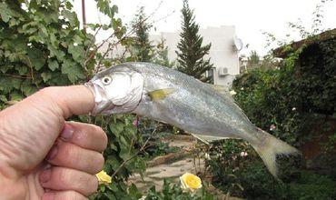 В Испании агрессивная рыба покусала двух детей и женщину