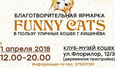 Благотворительная ярмарка Funny Cats в пользу бездомных кошек