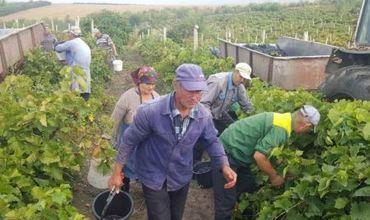 Стоимость труда в Молдове одна из самых низких в мире