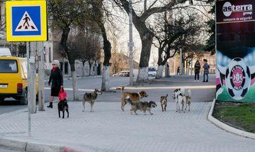 Муниципальные службы в Бельцах не вывозят из города трупы животных.