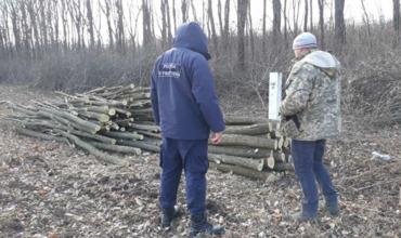 Житель села Гримэнкэуць попался на незаконной вырубке деревьев
